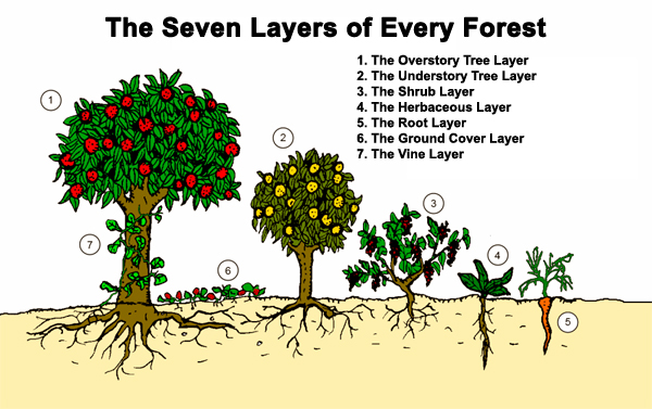 The seven layers of every forest illustration