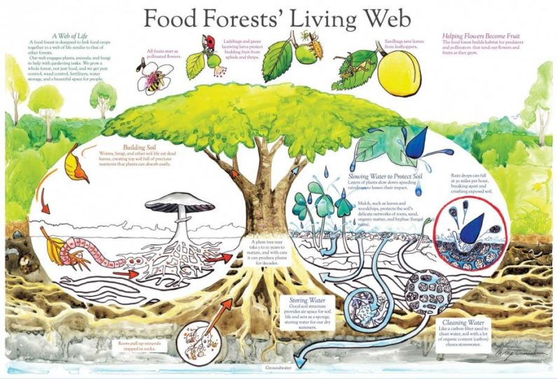 Food forests, in five minutes