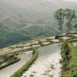 Peiligang culture begins in ancient China
