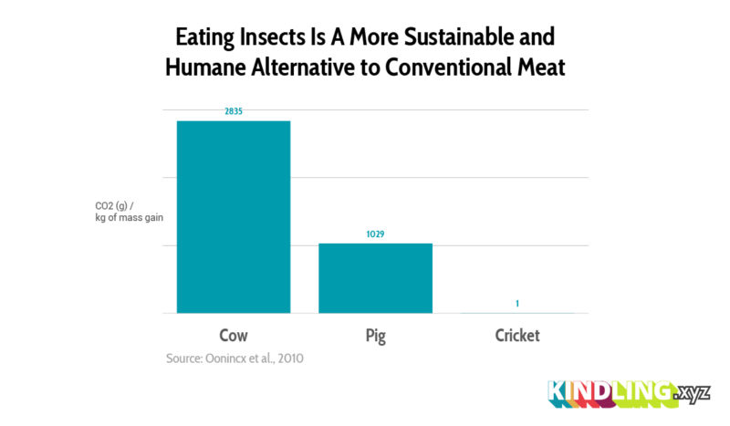 Eating Insects data