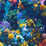 Coral and sea life