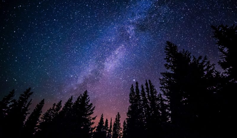 Stars above the forest